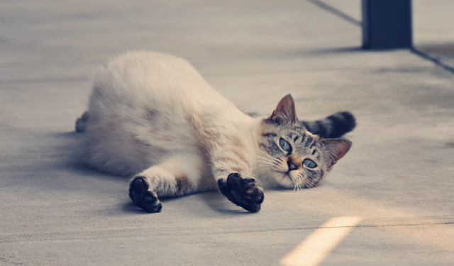 CNNが選んだ「世界6大猫スポット」福岡から相島