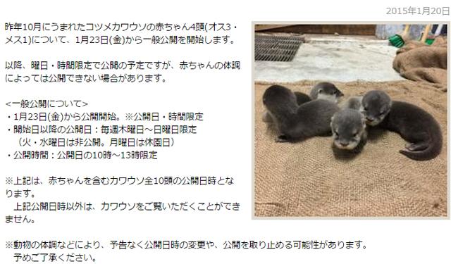 福岡市動物園 コツメカワウソの赤ちゃん23日公開