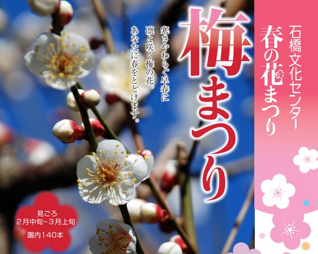 石橋文化センター「春の花まつり」開催中