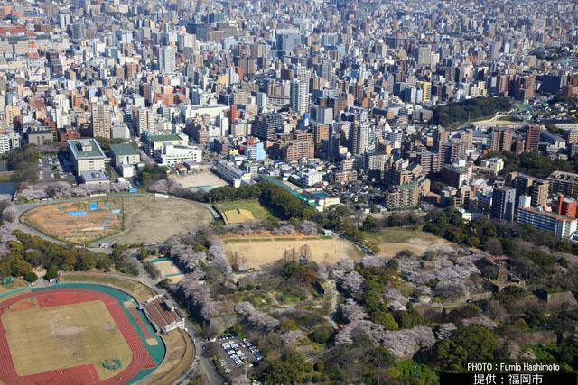 福岡市中央区の舞鶴公園「梅の花」が見頃