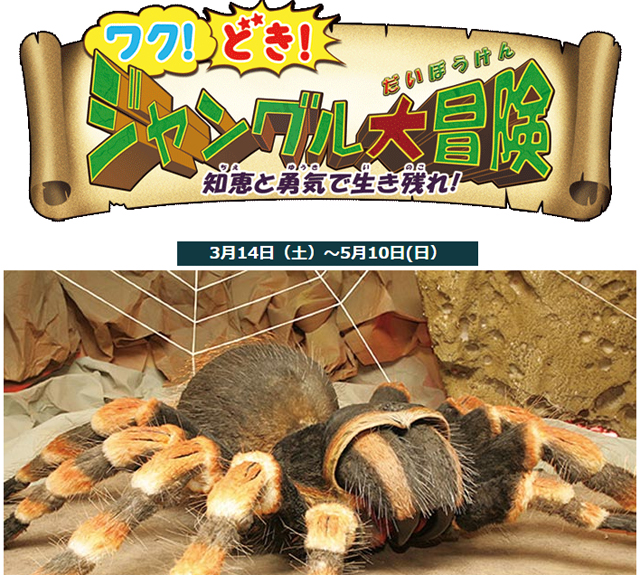 福岡県青少年科学館「ワク!どき!ジャングル大冒険」