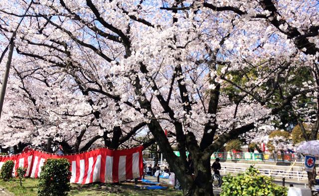 県内各地で「お花見」賑わう4月上旬まで見頃