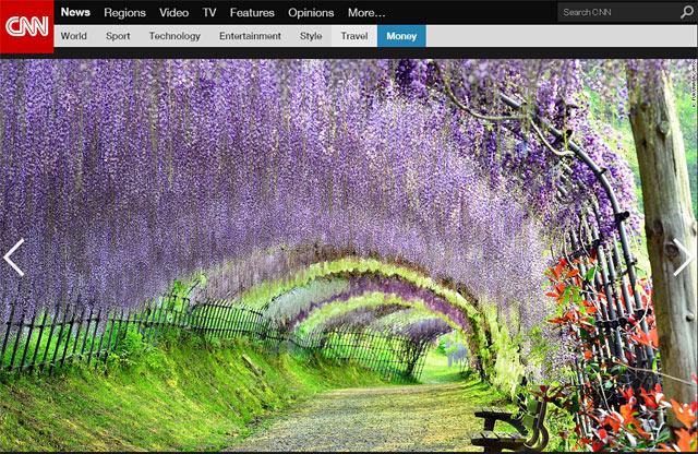 世界が認めた絶景、北九州の「河内藤園」