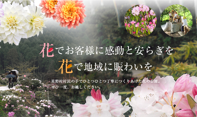 星の花公園「シャクナゲまつり2015」開催中