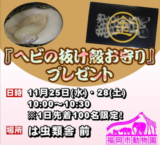 福岡市動物園「ヘビの抜け殻お守り」プレゼント企画