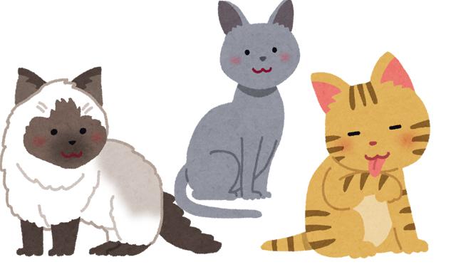 2月22日(ニャンニャンニャン)「猫の日」名前ランキング