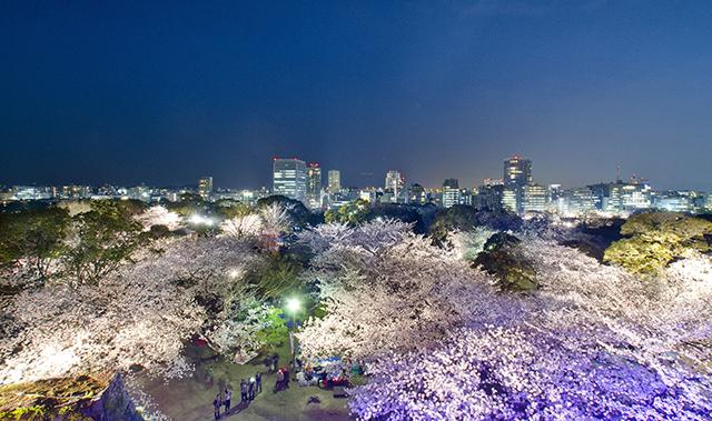 福岡城「さくらまつり」のライトアップ6日まで延長