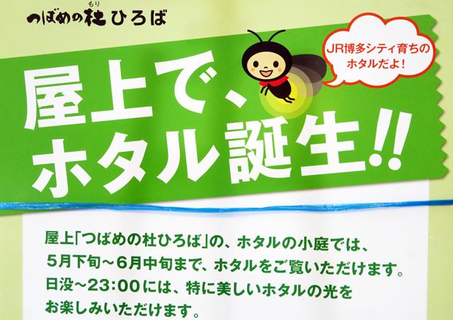 JR博多シティ育ちのホタル「つばめの杜ひろば」で観賞