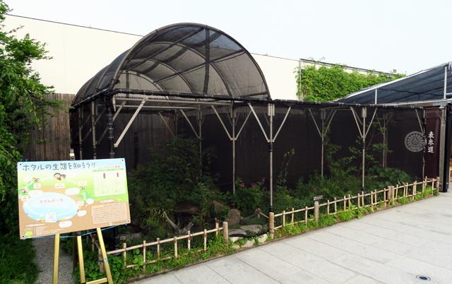 JR博多シティ育ちの「ホタル」観賞 5月25日~6月16日予定