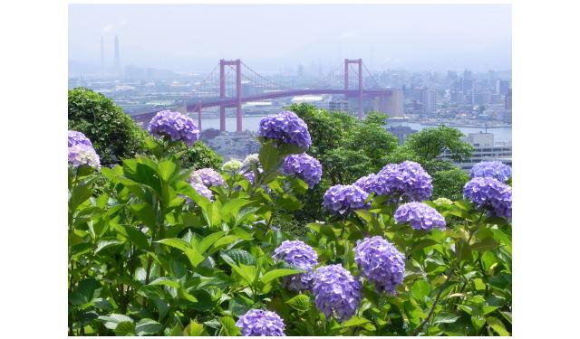 色とりどりのアジサイが約70,600株「若松あじさい祭り」6月16日~17日開催