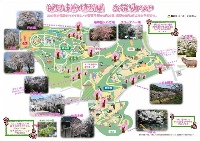 福岡市動植物園が『お花見マップ』公開