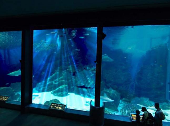 九州の外洋 外洋大水槽(1 階)