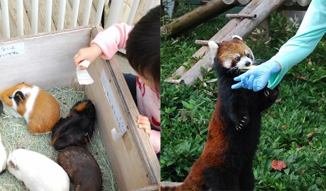 福岡市動物園 で4月19日「飼育の日」イベント