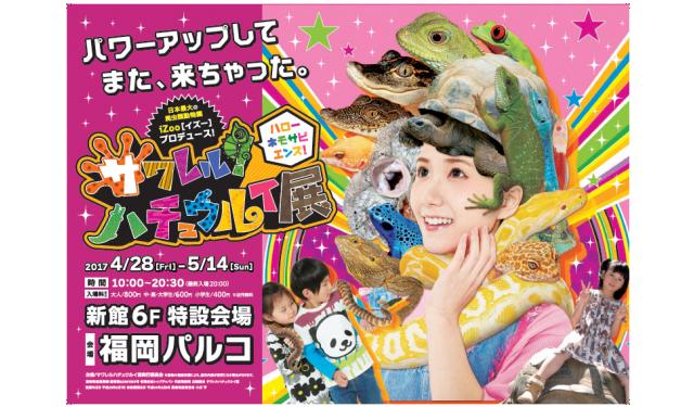 「サワレル ハチュウルイ展 in 福岡パルコ」今年も開催