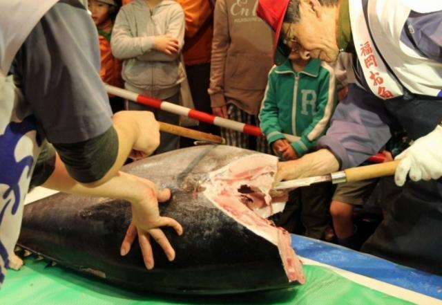 長浜鮮魚市場「市民感謝デー」本マグロの解体ショーなど
