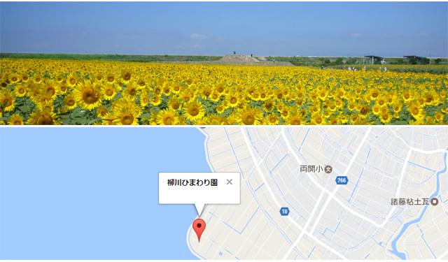 柳川の夏の観光スポット「柳川ひまわり園」7月開園