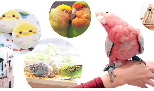 鳥フェス遂に九州初登場!「鳥フェス博多2017」開催へ