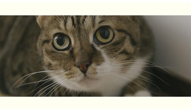 大川市が『ネコ家具できました』動画公開