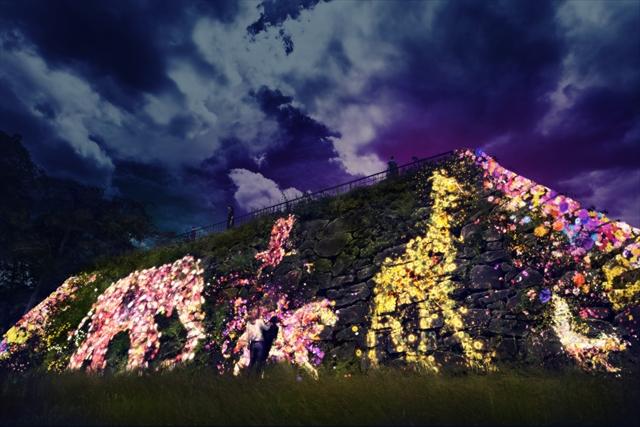 大天守台跡の石垣に住まう花と共に生きる動物達