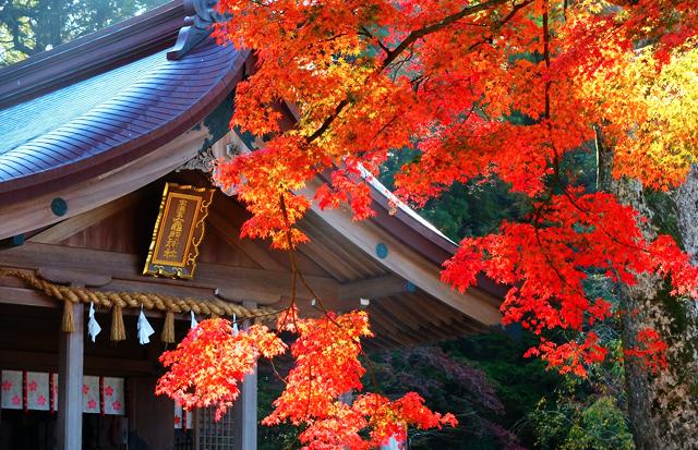 太宰府の竈門(かまど)神社で「もみじ祭り」ライトアップイベント