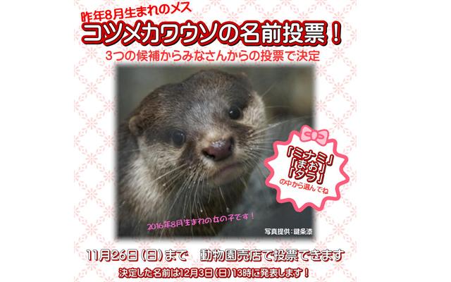 福岡市動物園「コツメカワウソ」の名前を決める投票を開催