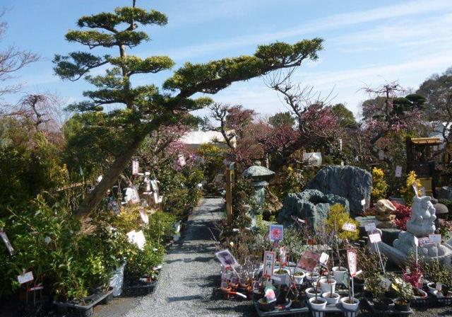 久留米百年公園「第13回久留米植木まつり」開催