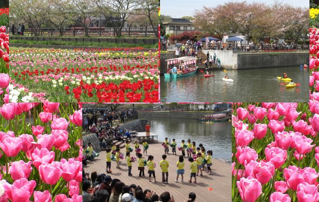 「則松金山川チューリップまつり」4月8日開催