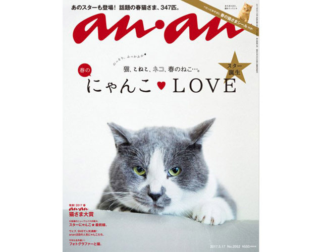 anan猫特集で愛猫の写真募集中