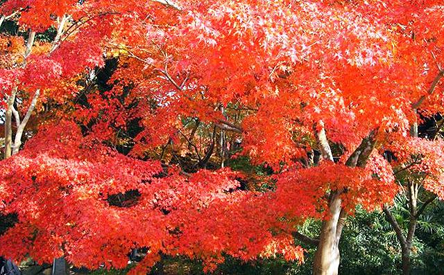 「筑前秋月紅葉まつり&秋の恵み大収穫祭2018」開催