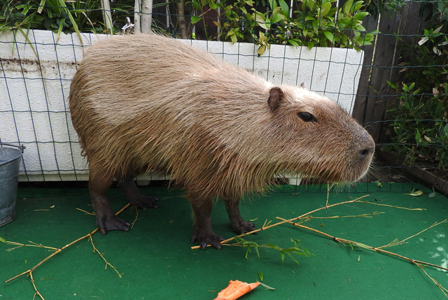 博多駅 つばめの杜ひろばに「ふれあい動物園」が登場 10月5日~8日