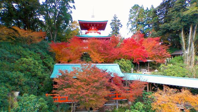 佐賀県武雄市の高野寺で『シャクナゲ寺 紅葉まつり』開催中