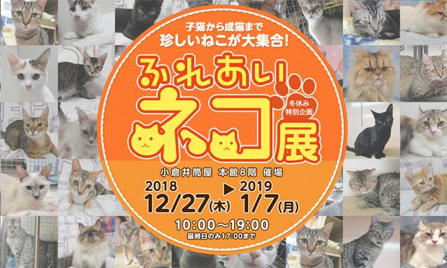 人気のネコや珍しいネコ40種60匹が大集合!「ふれあいネコ展」小倉井筒屋で開催へ!
