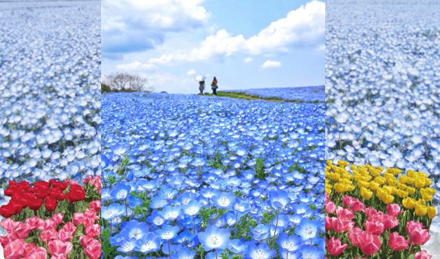 「海の中道フラワーピクニック2019」3月~5月開催!
