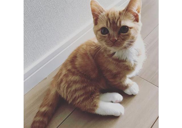西日本初!短足ネコ専門「猫カフェ」大名にオープン!