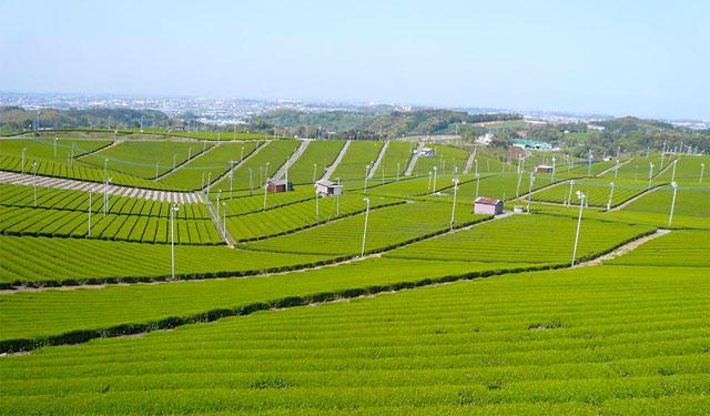 リーガロイヤルホテル小倉で「福岡が誇る 八女抹茶フェア」開催
