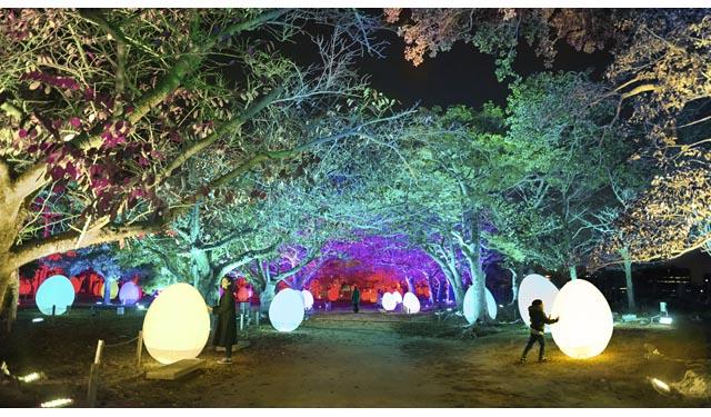 新たな4作品を含む計7作品「チームラボ 福岡城跡 光の祭」が今年も開催決定