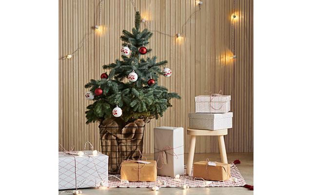 イケア福岡新宮で「本物のモミの木」販売開始、冬のフードメニューも続々登場