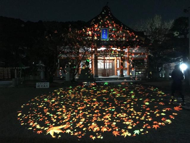 美しいライトアップ!プロジェクションマッピング!紅葉八幡宮「もみじ祭り2019」開催!
