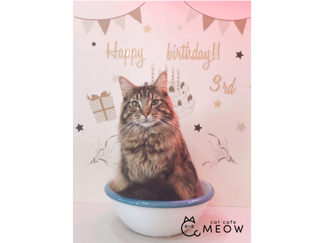 大名の「猫カフェMEOW」11月・12月生まれの猫ちゃんをお祝いするお誕生日会を開催中
