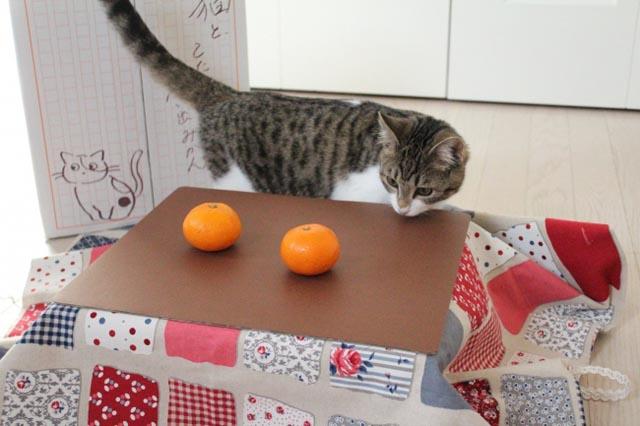 昨年1ヶ月で1000箱完売の「ネコ専用こたつ付きみかん」本年分の予約スタート