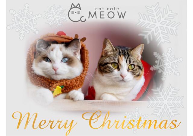 猫ちゃんを膝の上に乗せて写真撮影!大名にある猫カフェMEOWでクリスマスイベント開催中!