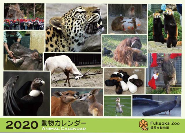 毎年大人気!福岡市動物園オリジナル『動物カレンダー2020』 販売開始!