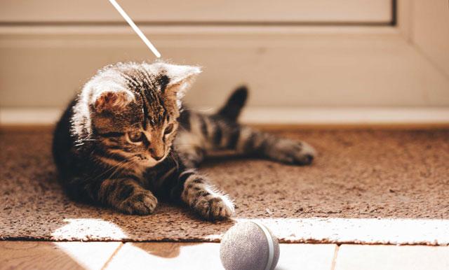 遊んでくれるネコ専用自動ボール「Wicked Ball」クラウドファウンディング開始