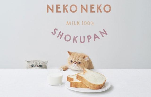 九州初の常設店「ねこねこ食パン マークイズ福岡ももち店」オープン!