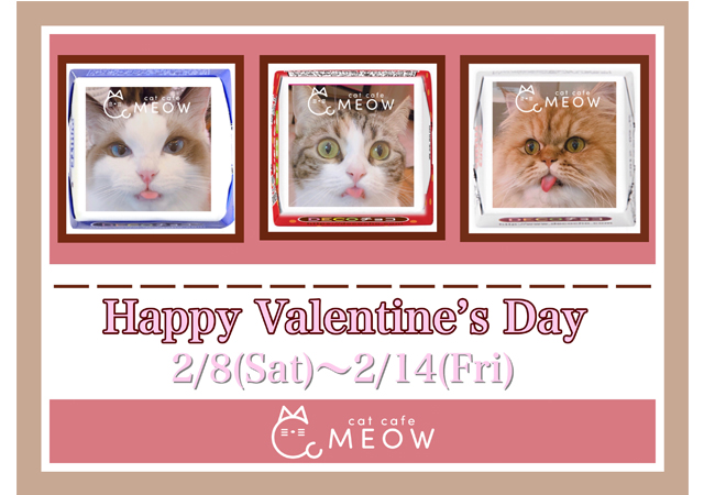 大名にある猫カフェMEOWで「バレンタインイベント」開催!