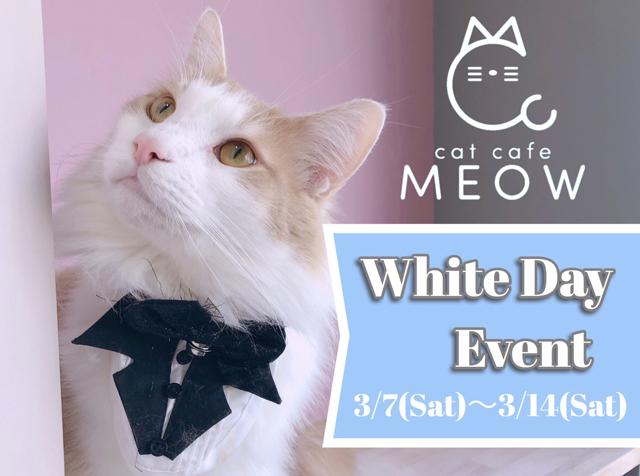 大名の猫カフェMEOWで「ホワイトデーイベント」開催中!