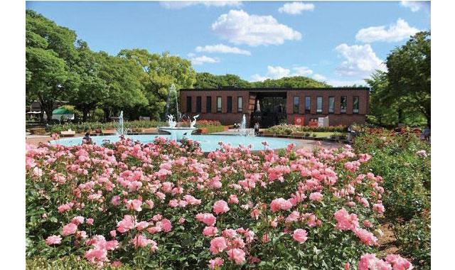 石橋文化センターで「春のバラフェア2020」開催へ!