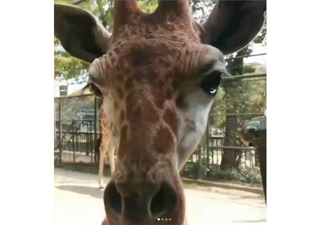 臨時休園中の福岡市動物園がSNSで動物たちの様子を発信
