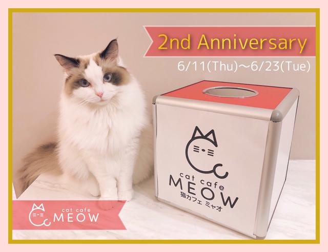 大名の猫カフェMEOW「2周年記念イベント」開催