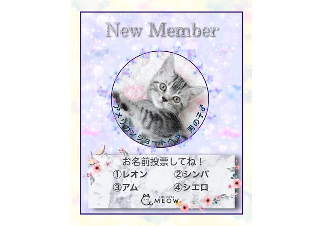 大名の猫カフェMEOW 待望の新メンバー加入!名前を投票で決定